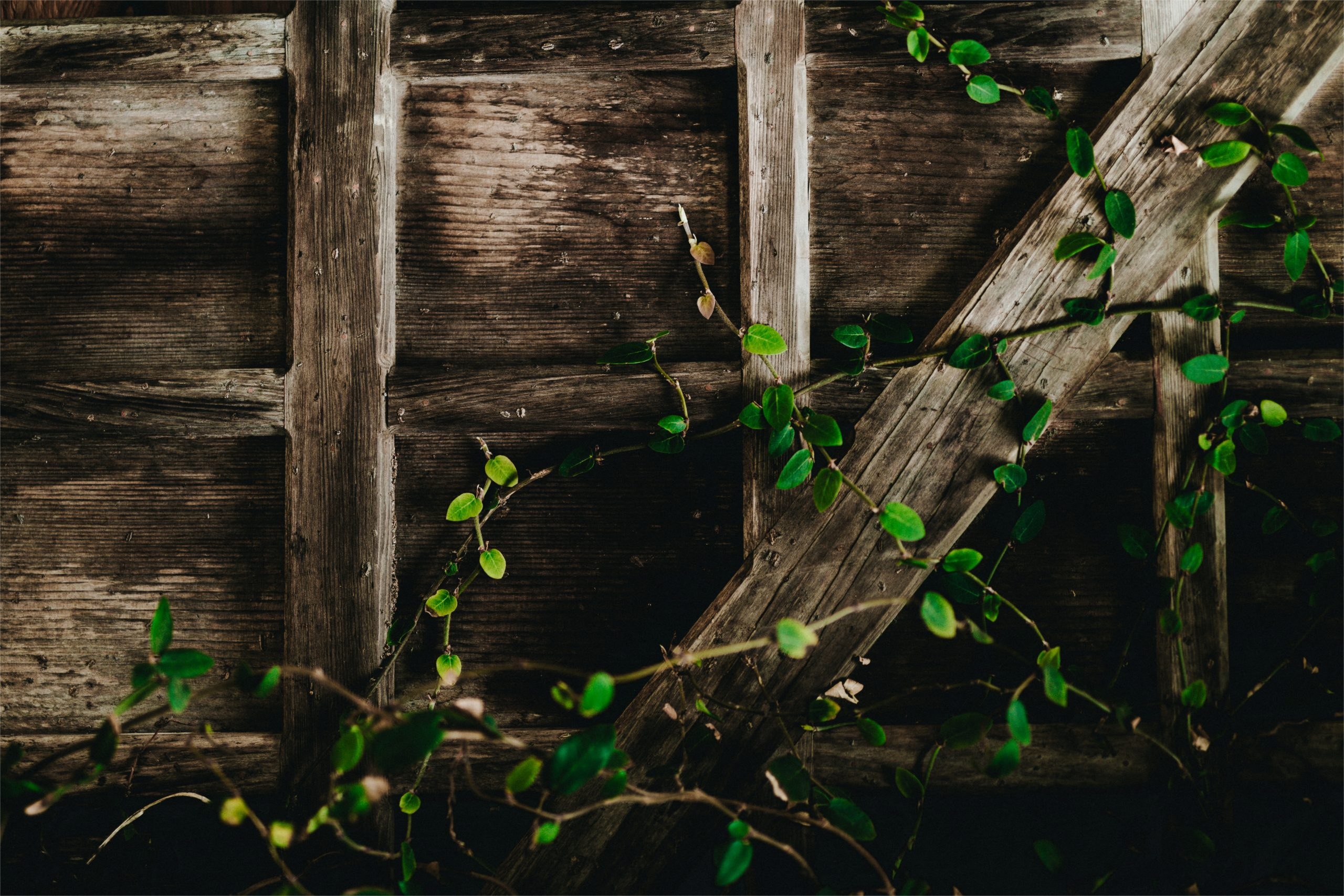 A trellis with green vines climbing up it